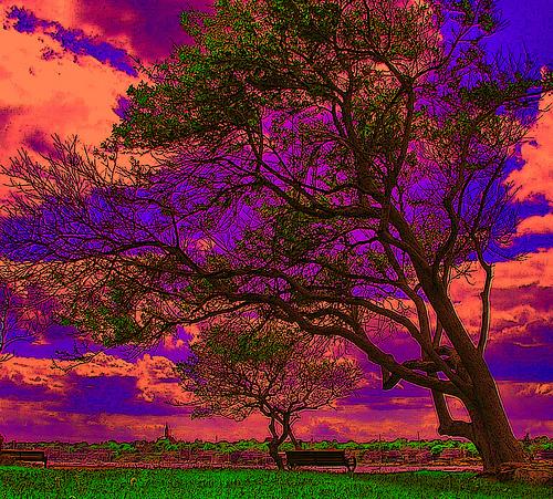 Pokok yang kuat