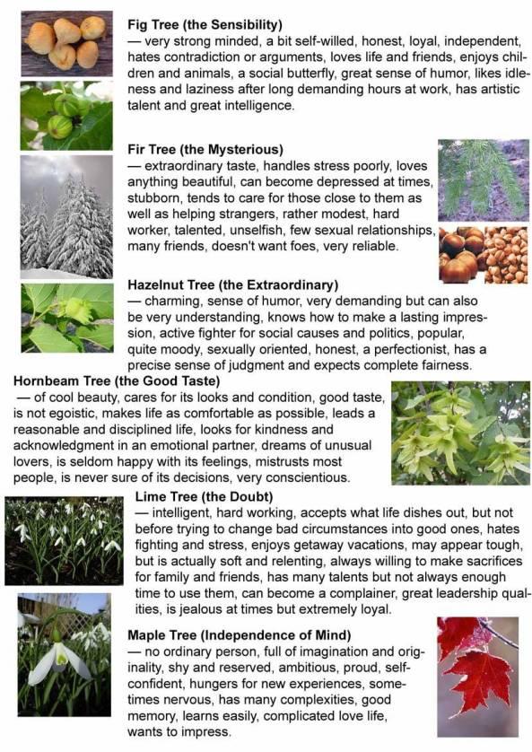 Pokok vs Lahir 4
